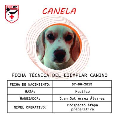 CANELA